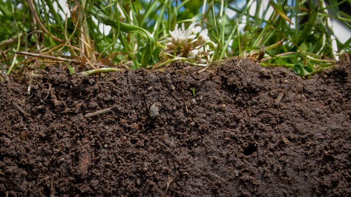 The Surprising Healing Qualities of Dirt