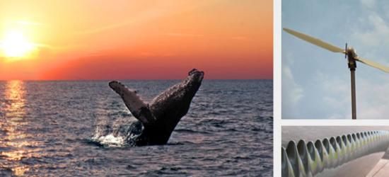 ballena biomimicry