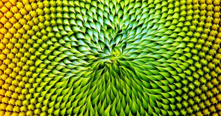 biomimicry biomimesis