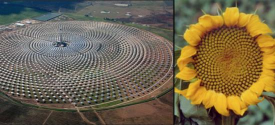 planta solar biomimicry