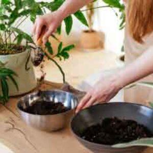 Curso online de Compost