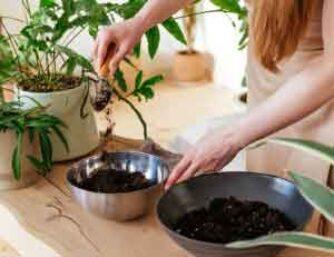 En la naturaleza, todo lo que sale de un proceso es el insumo de otro. Por eso te invito a conectar con el compost convirtiendo tus desechos de cocina en abono.