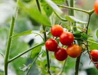 Creo que es muy importante conectar con nuestra alimentación desde la semilla al plato, conectando a cada paso con esa planta que nos permite la vida.