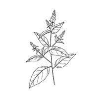 Voy a compartirte preparados con plantas medicinales y comestibles, abarcando la Fitoterapia, Alimentación, Cosmética, Limpieza del hogar y mucho más!