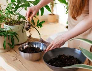 home-curso-online-compost-compostaje